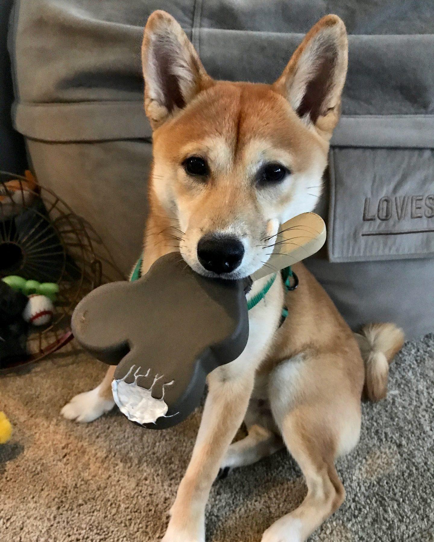 mickey-ice-cream-bar-dog-toy